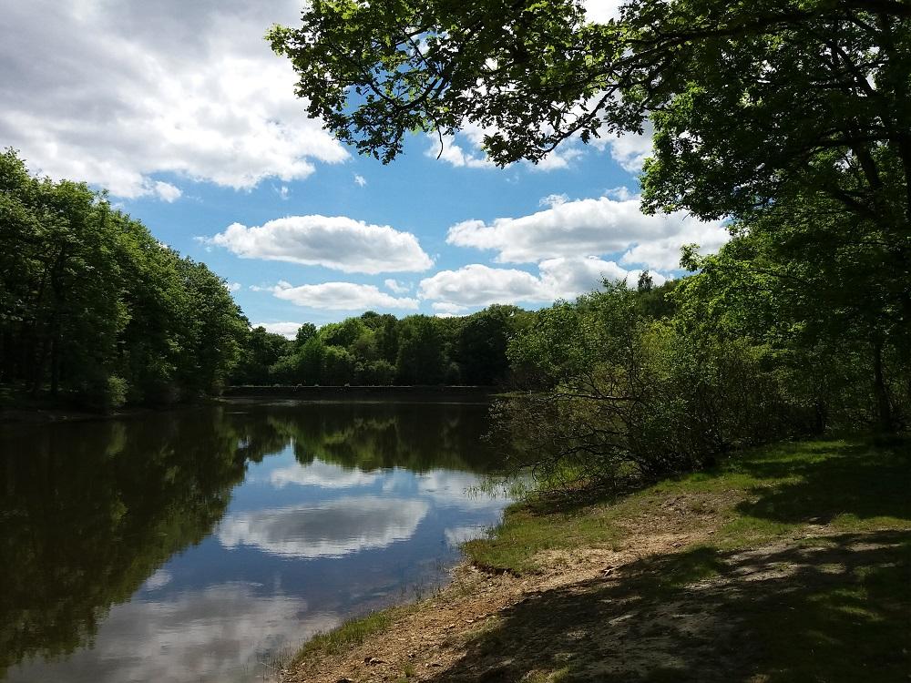 l'étang de la grenouillère de la forêt de Rambouillet