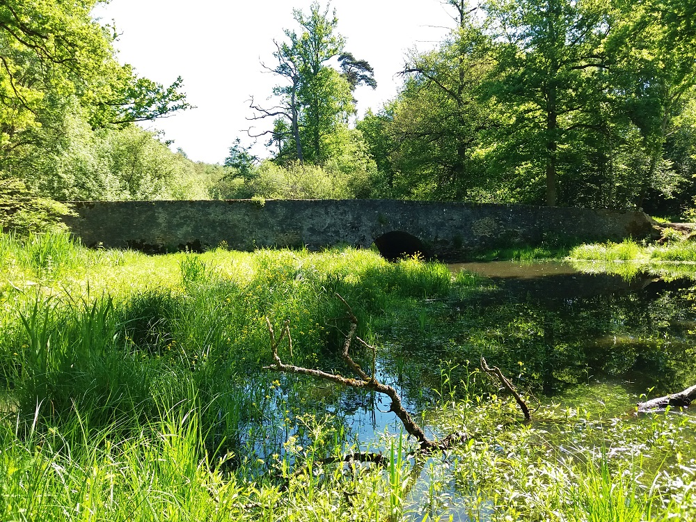 pont de l'étang d'or de la forêt de Rambouillet