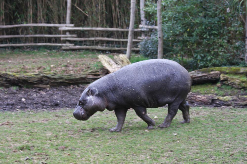 Visite zoo de la fl che shunrize for Chambre zoo de la fleche