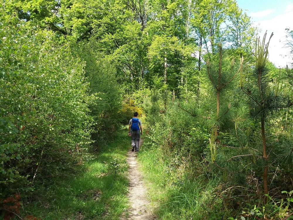promeneur sur la route des chênes d'amérique à Rambouillet