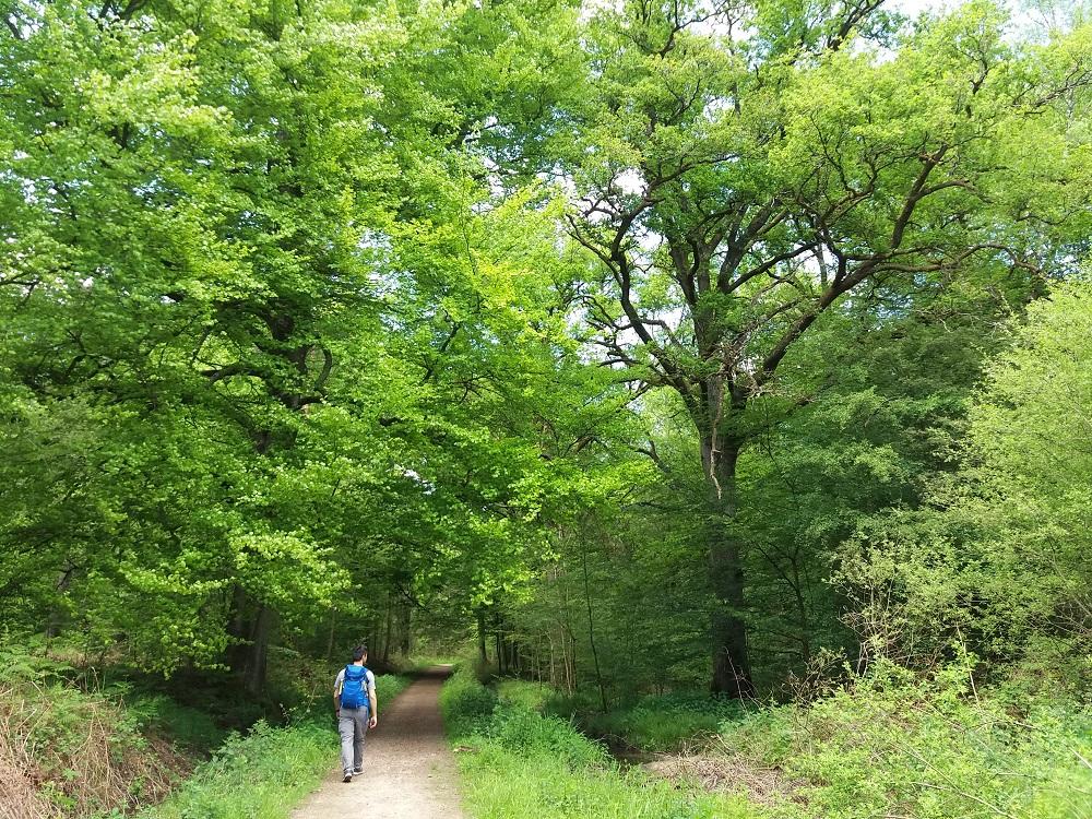 promeneur sur la route maison nouhan à Rambouillet