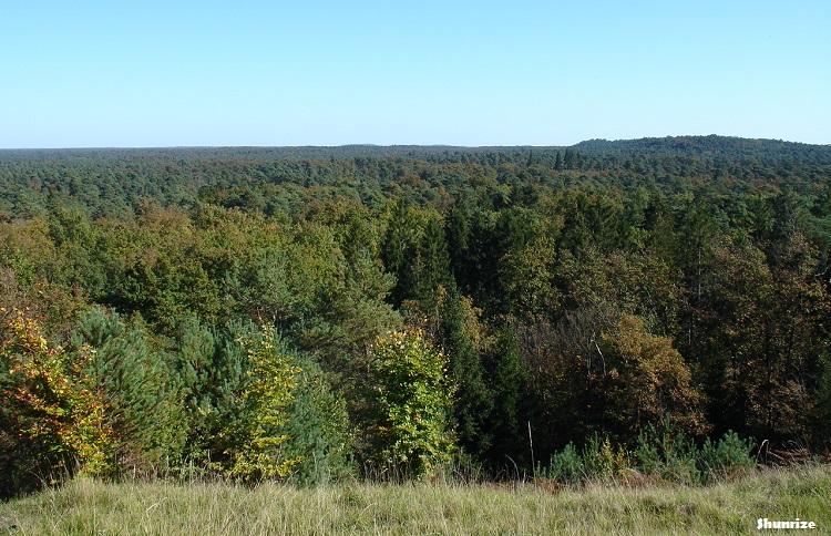 Forêt de Fontainebleau - Le Lac Vert