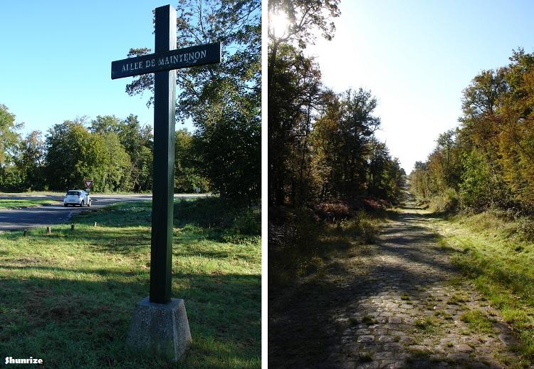 Forêt de Fontainebleau - Allée de Maintenon