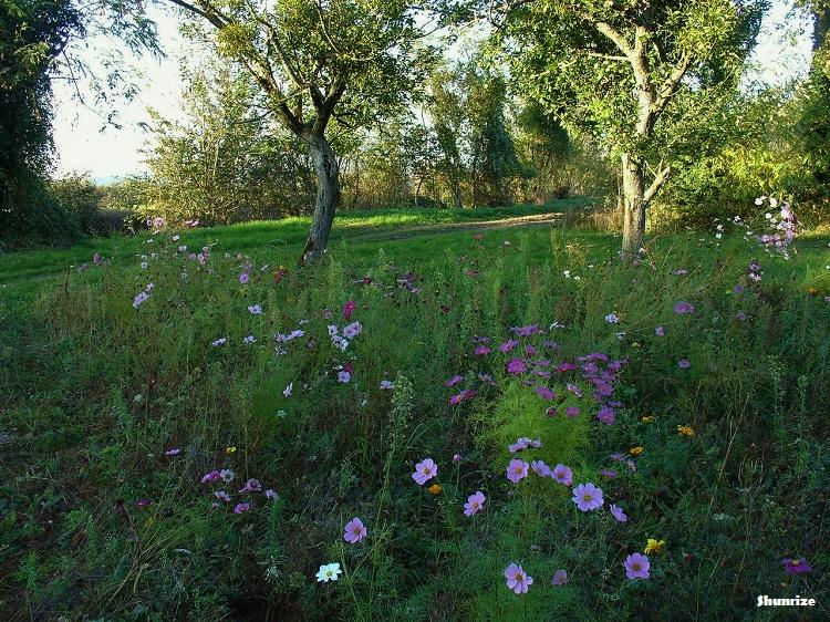 fleurs chemin du petit bois