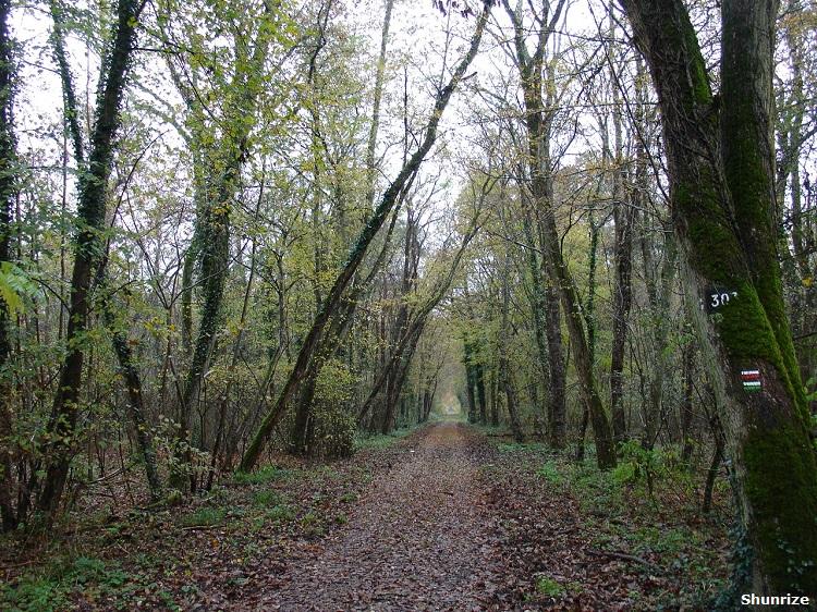 Forêt de Fontainebleau à Fontaine-le-Port