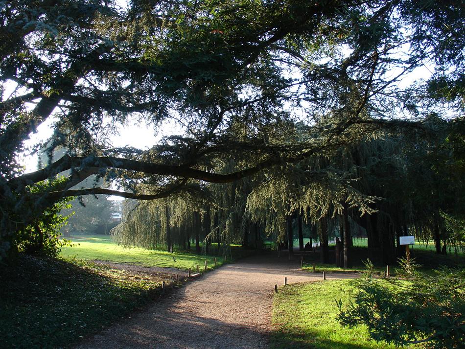 cèdre bleu arboretum de la vallée aux loups