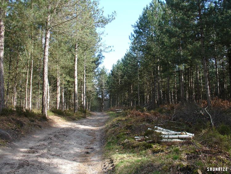 Bois Misery d'Huison-Longueville