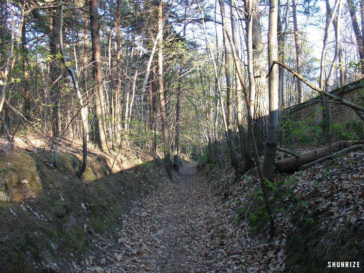 Bois du Boulay à Breuillet
