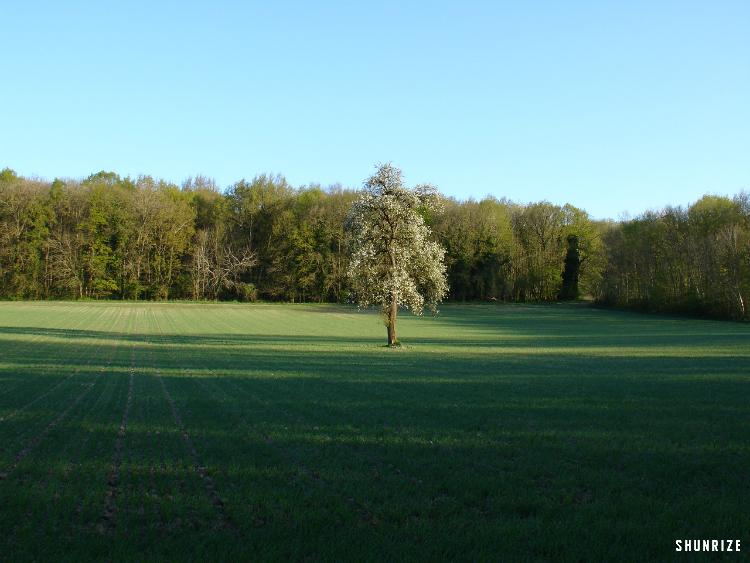 Bois des Herbages à Saint-Chéron