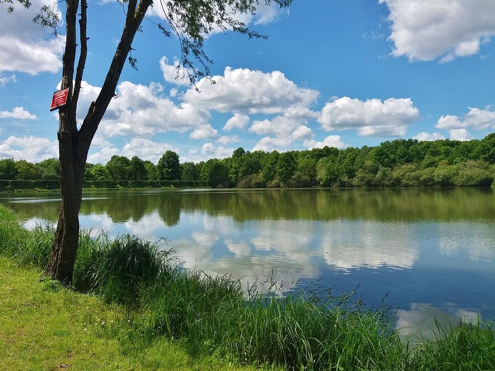 prise de vue à l'étang de la tour de la forêt de Rambouillet