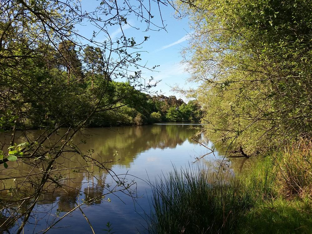 prise de vue à l'étang d'or de la forêt de Rambouillet