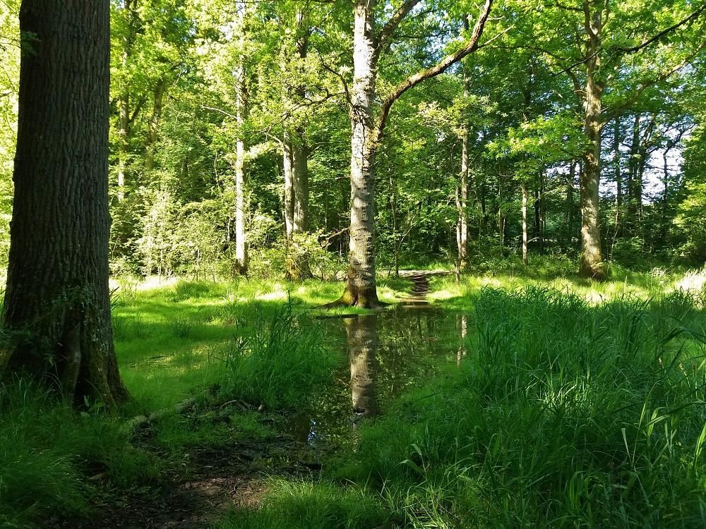l'étang d'or de la forêt de Rambouillet