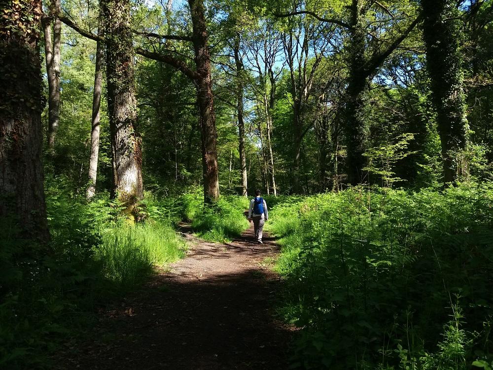 promeneur longeant la Drouette dans la forêt de Rambouillet